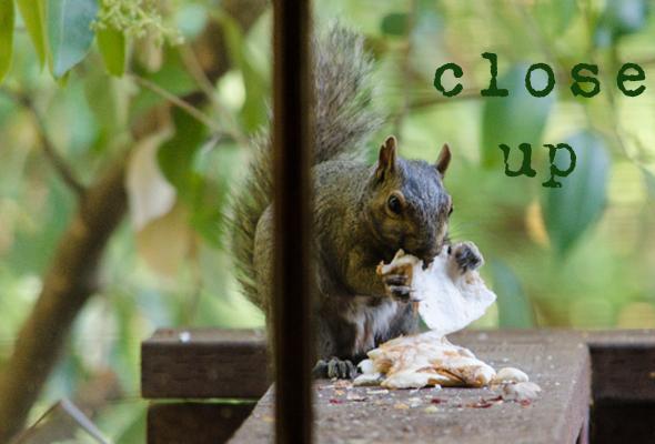 Close Up Squirrel