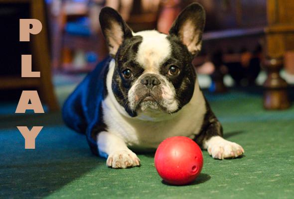 Bubba Play Ball