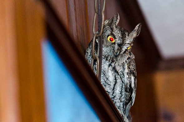 owl-3b2