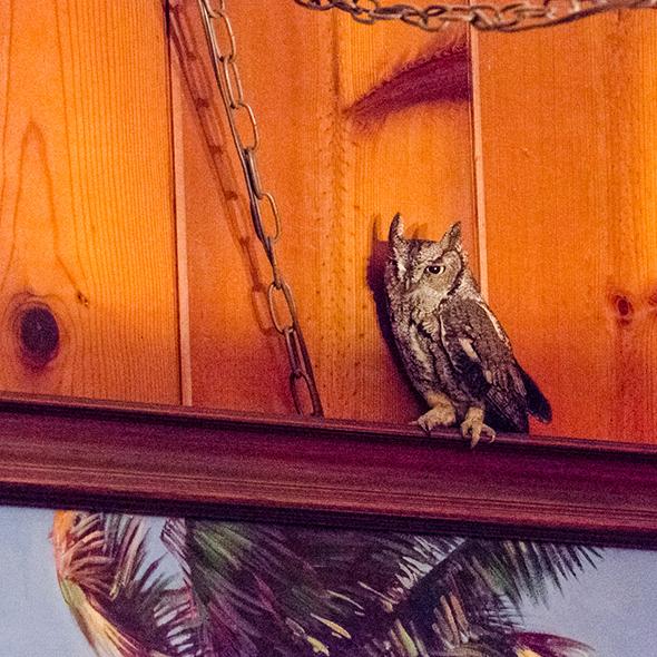 owl-4b1