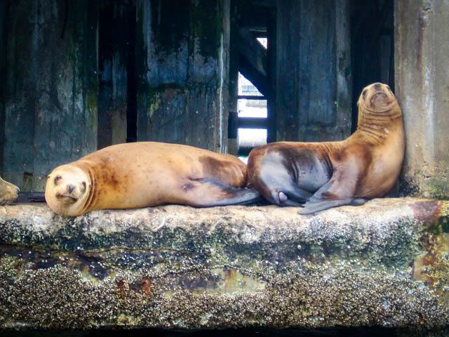 Sea Lions Monterey, cA