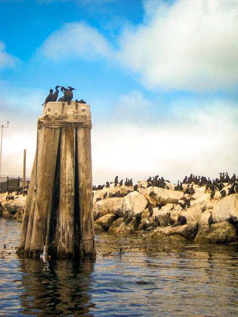 Views of Monterey, CA