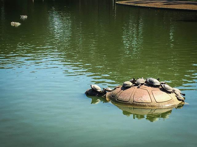 turtles in GGP