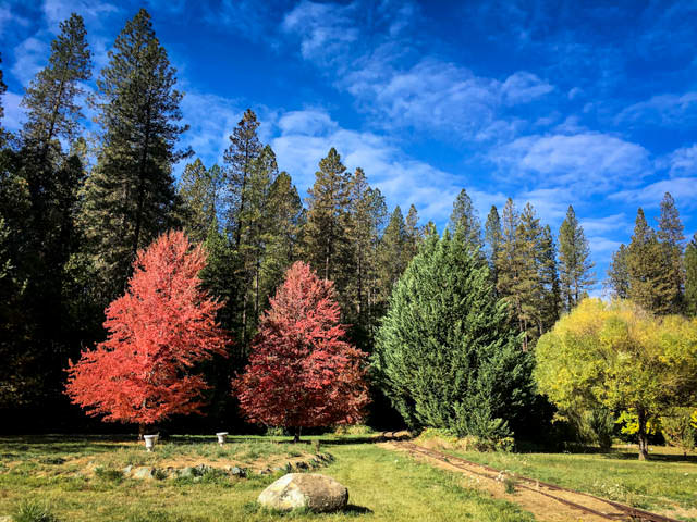 Fall Colors in Nevada City