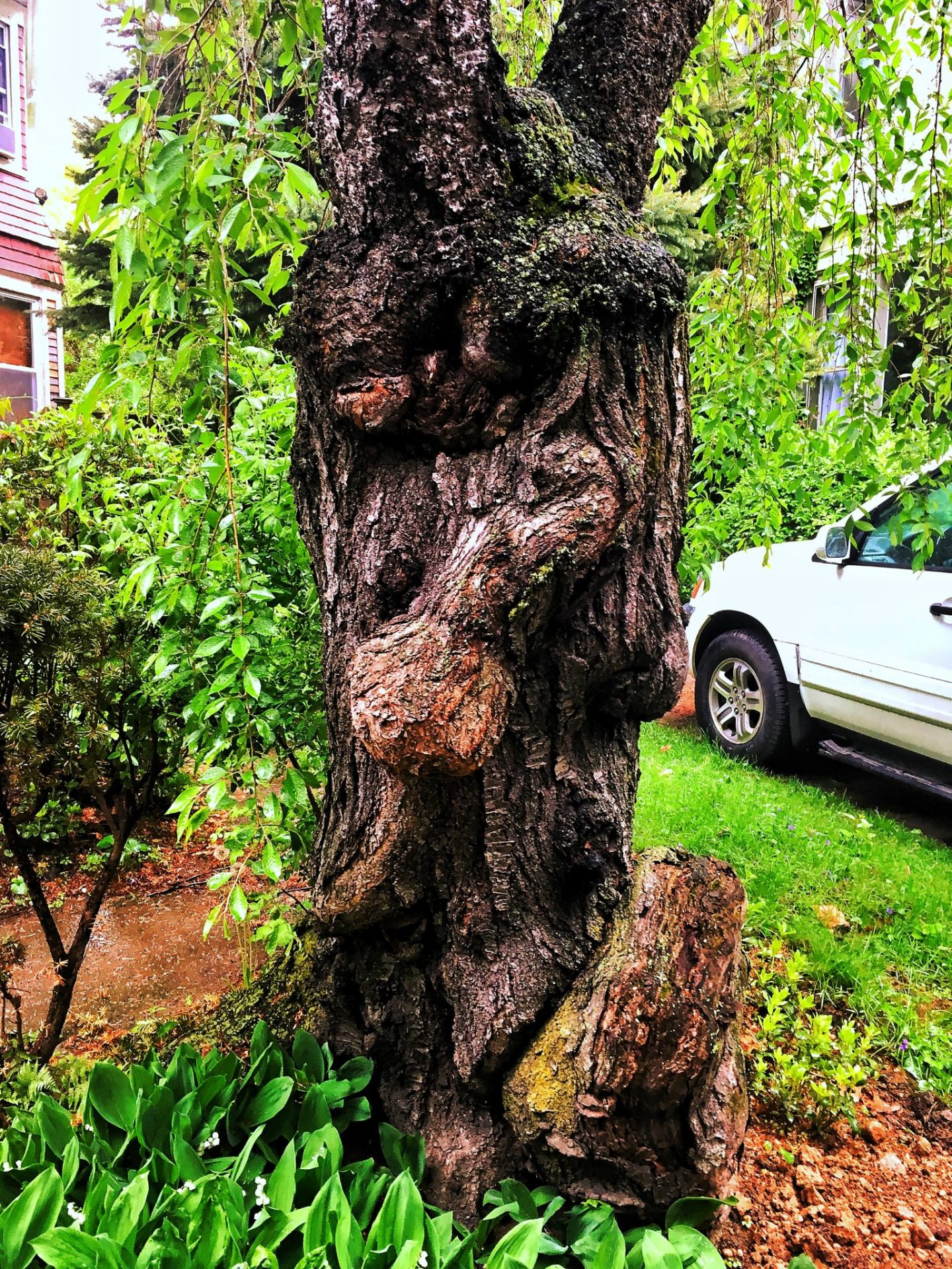 Ditmas Park tree trunk
