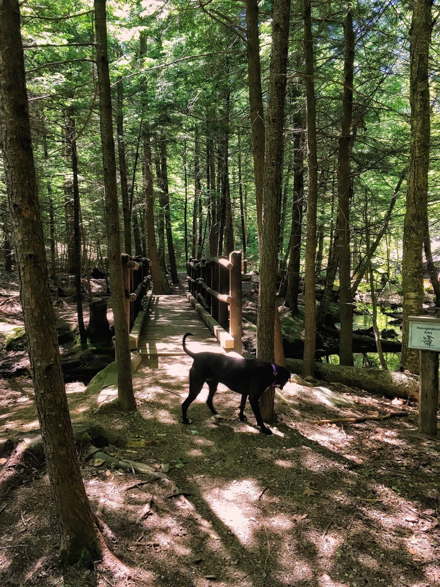 Lake Winnipesaukee nature trail