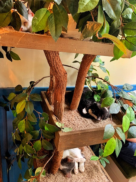 Three cats at the Brooklyn Cat Cafe