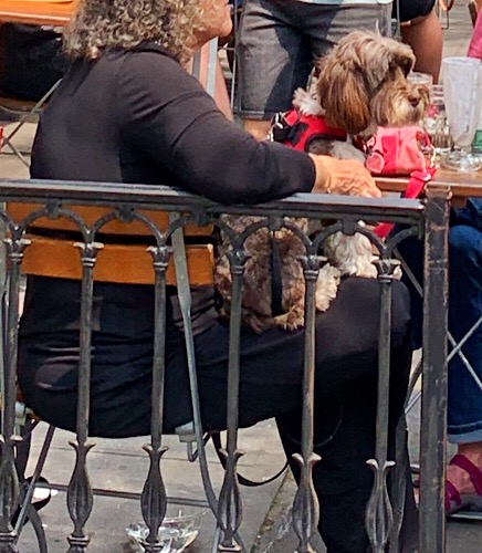 Cute dog in Brooklyn Heights