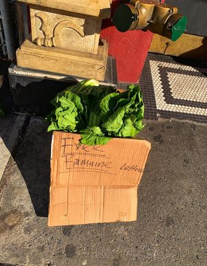 Romaine lettuce abandoned on the street. Giving away for free