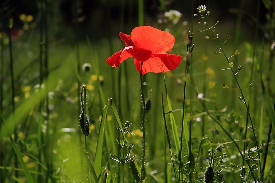 Duel poetic: Prin iarba rece & Sărutul