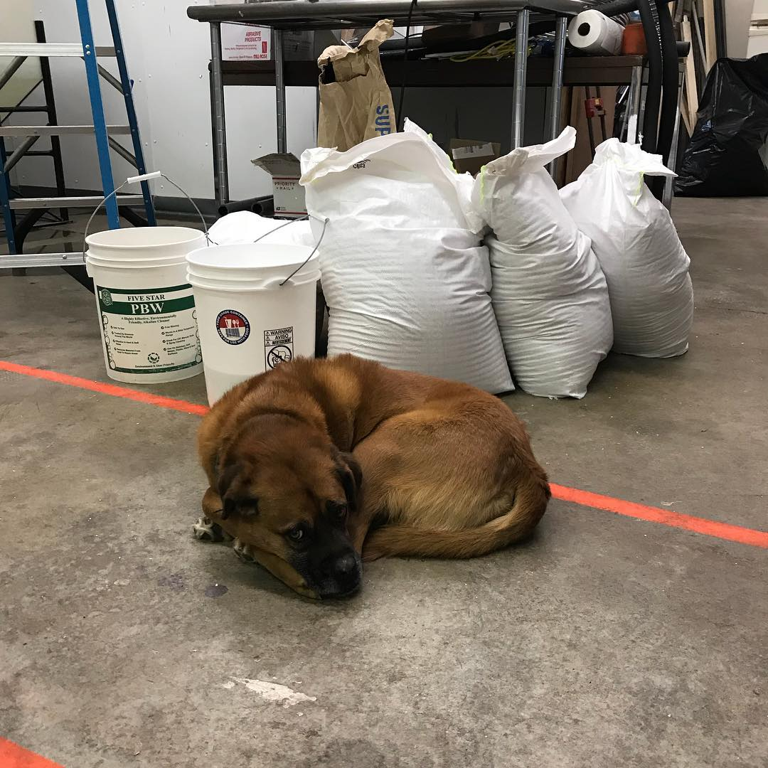 Looks like Garth is guarding the Grain for our next batch! #lithermanslimited #concordnh #nhbrewers #brewerydog