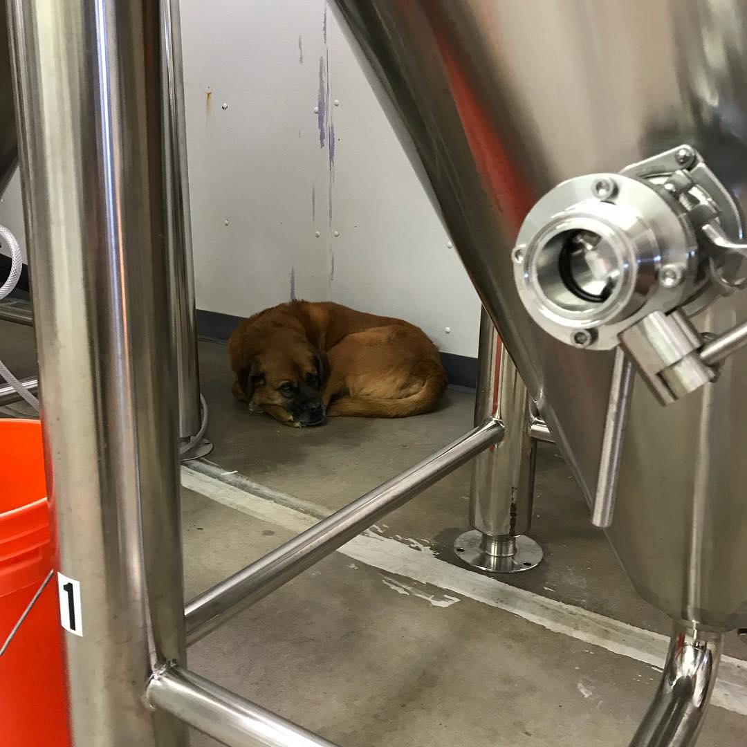 Who needs a doghouse when you have for fermenters? #brewerydog #lithermanslimited