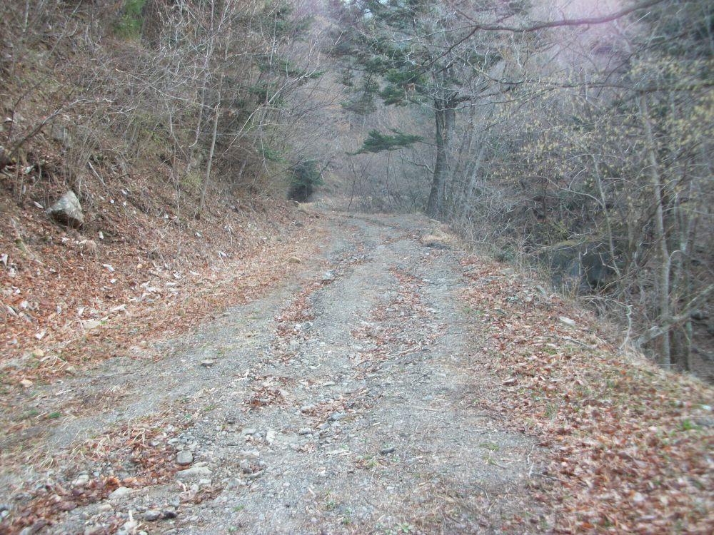 権現山の林道