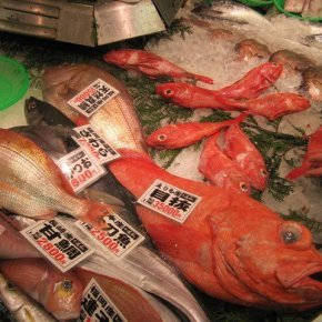 JAPANESE FOOD KALEIDOSCOPE - 2