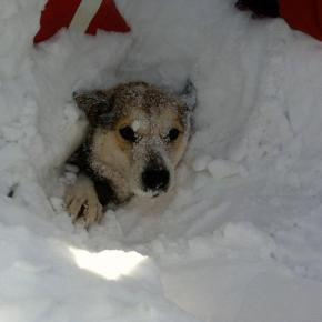 SNOWED IN DOGS IN NEED OF HELP