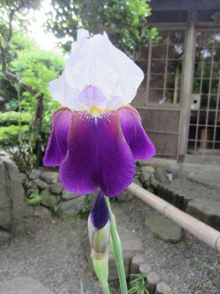 flowers japan 38