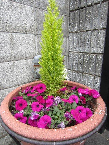 flowers japan 45