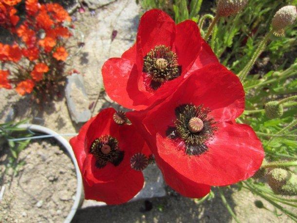 flowers japan 57