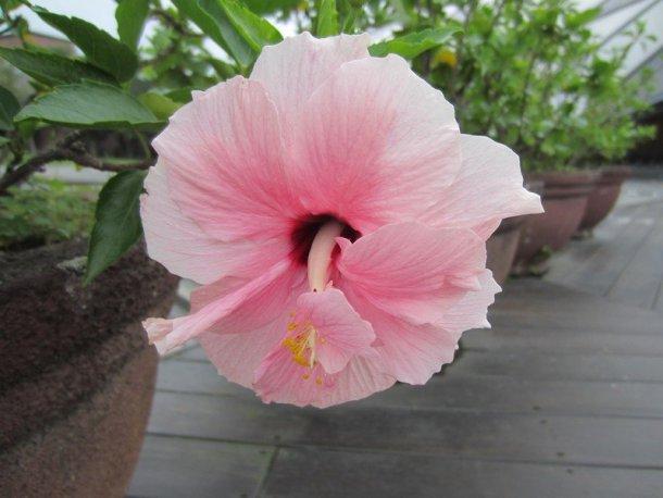 flowers japan 75