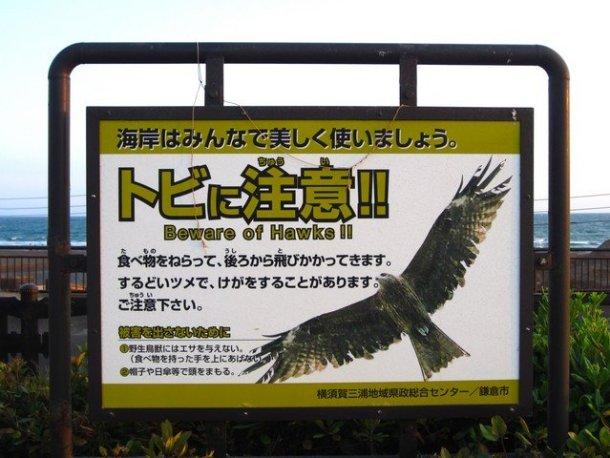 kamakura beach 5