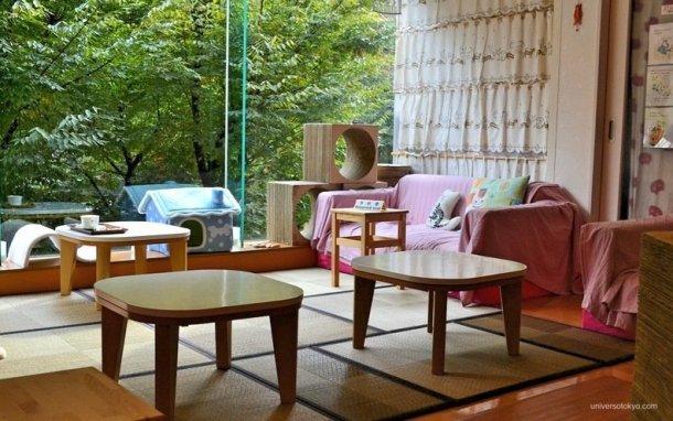 tokyo pet cafes47