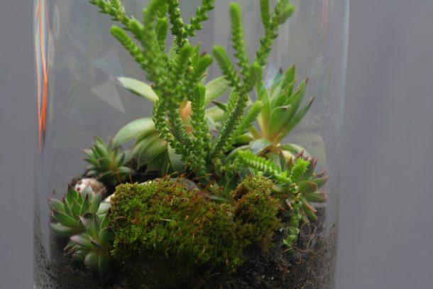 make your own terrariums 3