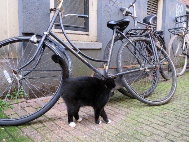 amsterdam - part 3 5