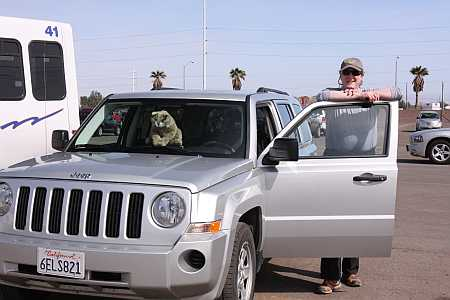 sheep-in-jeeps-clothing