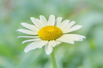 This image has an empty alt attribute; its file name is Daisy-Ambassadors.jpg