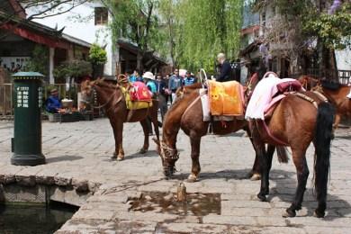 Postpferde? Nein, Pferde für Touristen!