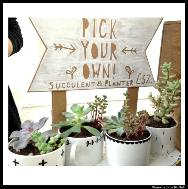 Oh-no-Rachio-Rachel-Basinger-succulent-kit-and-planter-photo-by-Little-Big-Bell