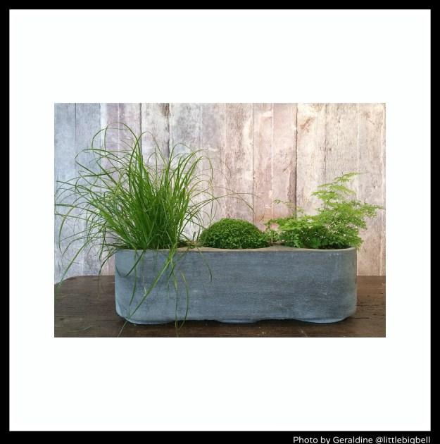 Jans-Milonton-Briq-planter-Merci-Paris-photo-by-Little-Big-Bell