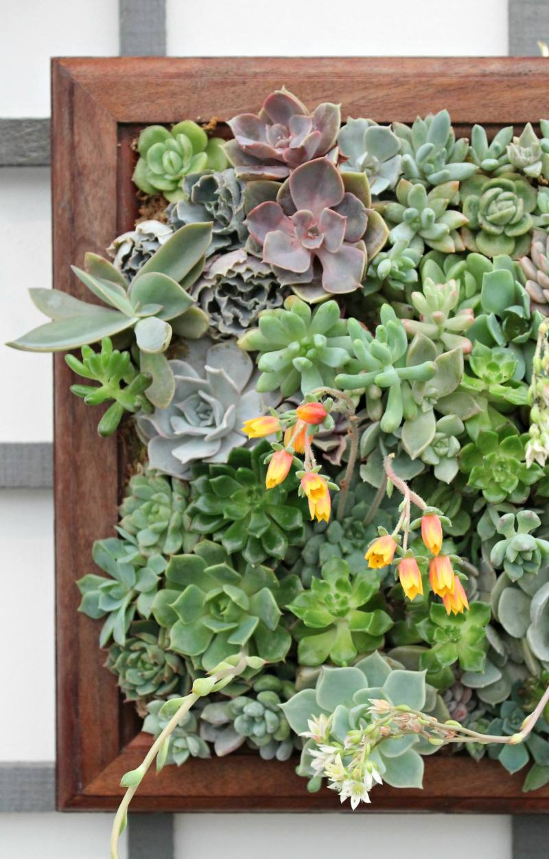 Succulent-wall-blueleaf-plants-photo-by-Little-Big-Bell