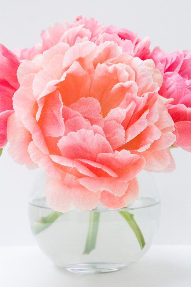 Coral-sunset-peony-Little-Big-Bell