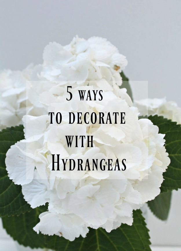 Hydrangea-1-photo-by-Little-Big-Bell