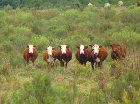 Estancia El Ceibo is a working cattle ranch.
