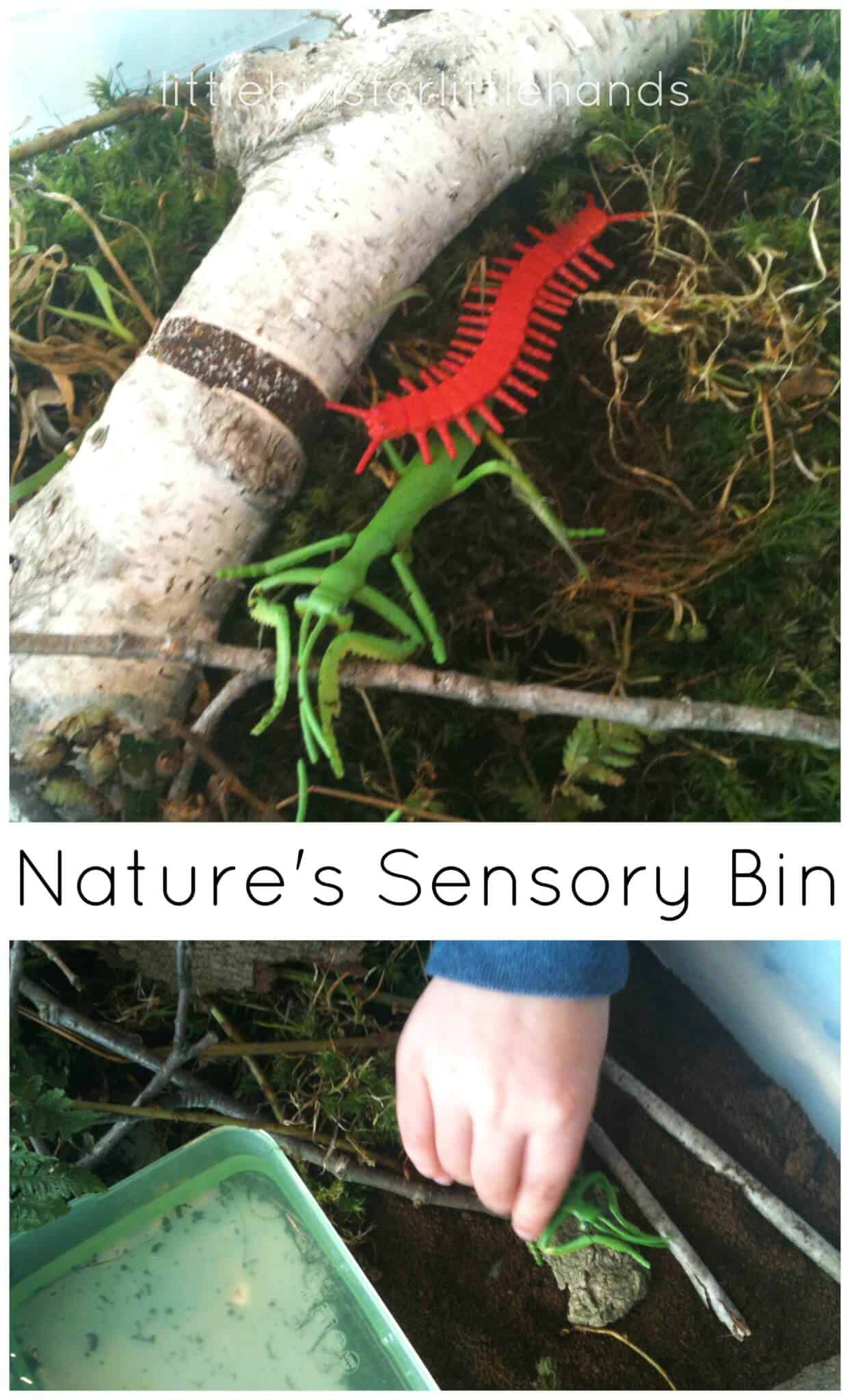 Nature Sensory Bin Preschool Outdoor Activity
