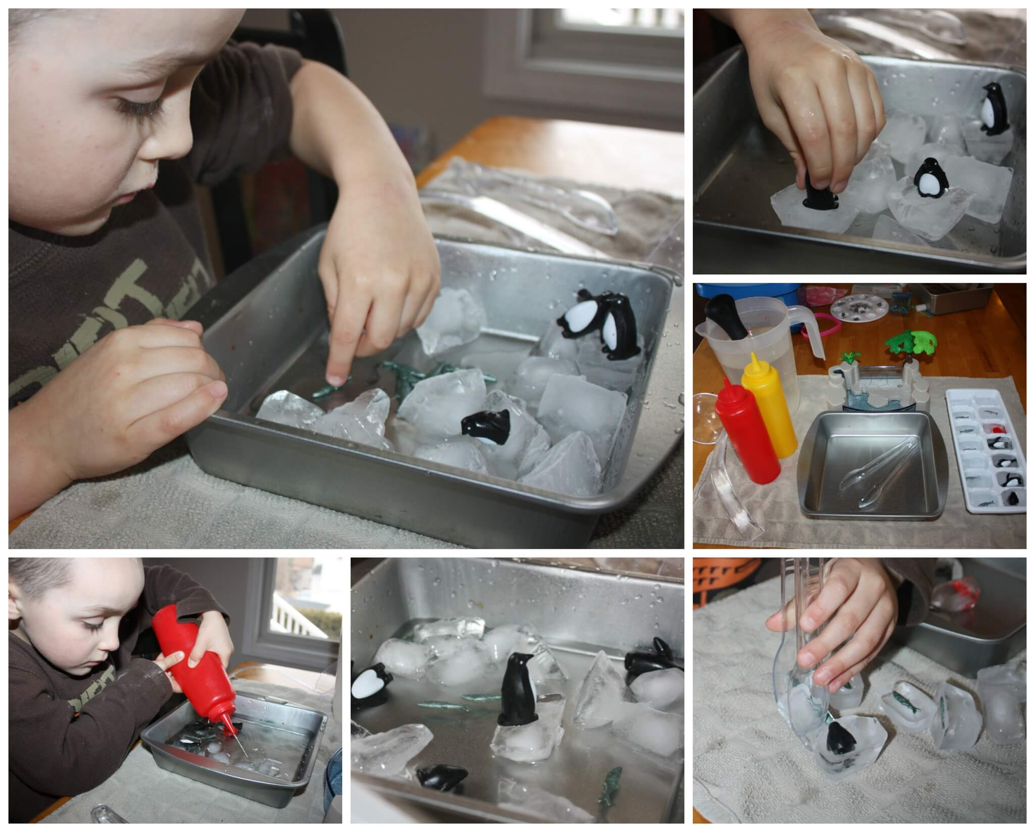 Learning About Penguins Amp Ice Melting Activity Science Saturday