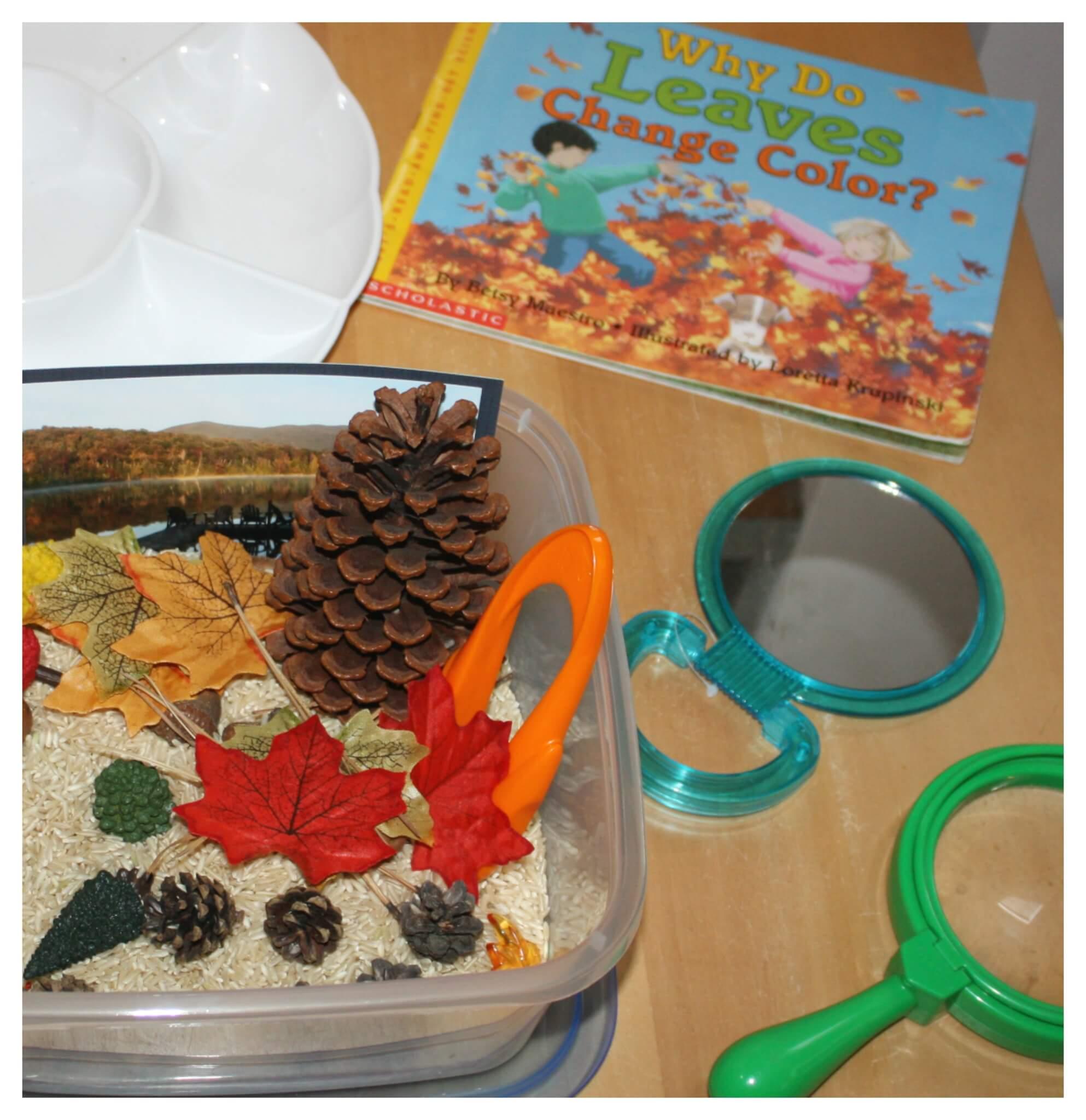 Fall Activity Discovery Table Preschool Fall Sensory Play