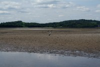 Heron on the sand