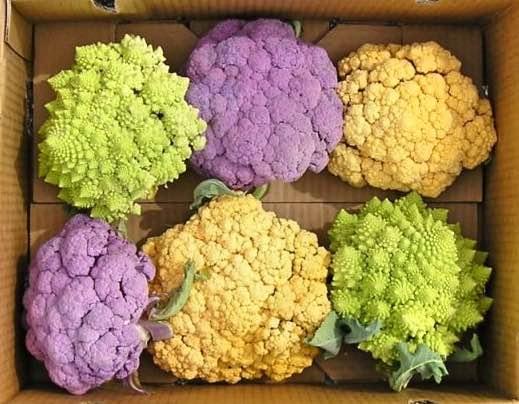Drie kleuren bloemkool