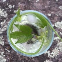little-bitte-cocktails-11