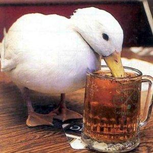 a-duck-walks-into-a-bar-plasterer1