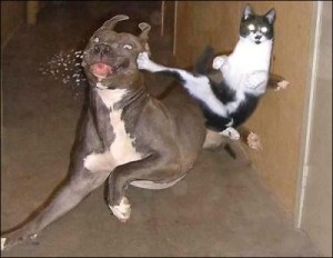 ninja_kitty_kicks_dog