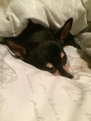 Miekie, The Little Black Dog
