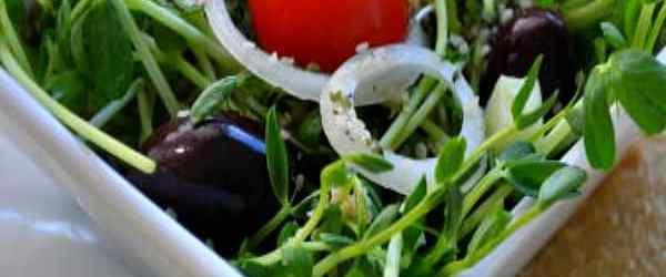 How to Create a Salad Garden