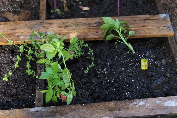 pallet garden plant
