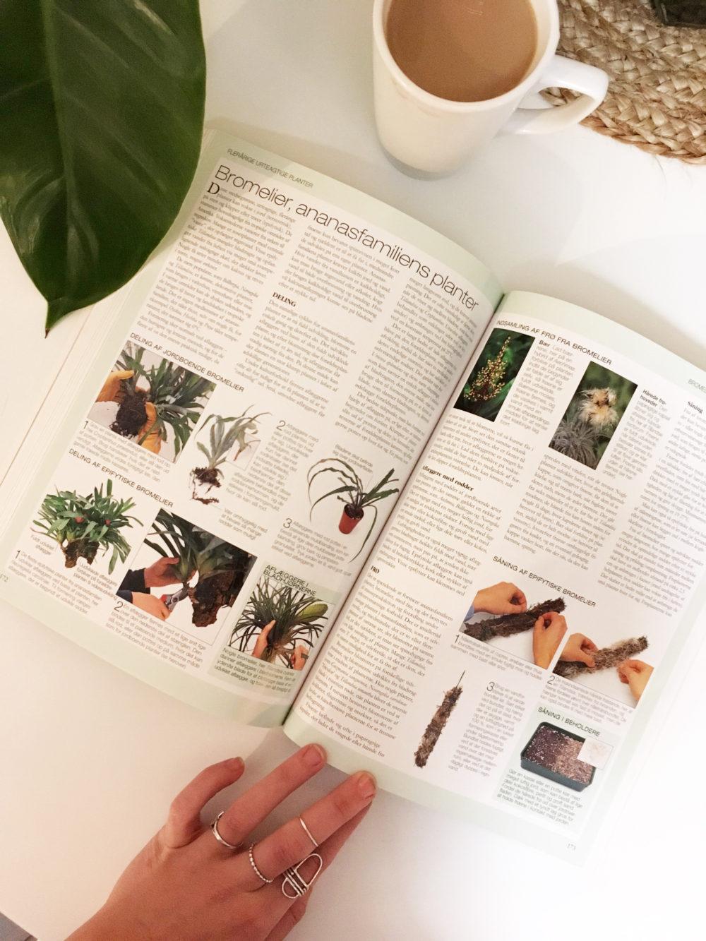 planteformering