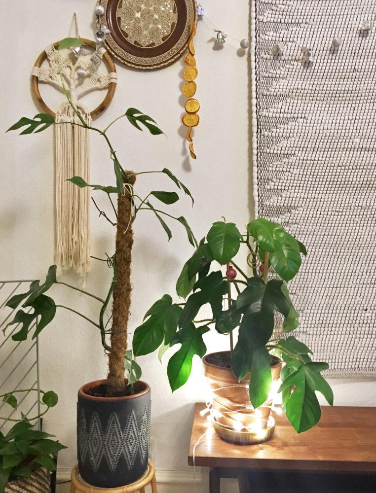 Stueplante med julepynt