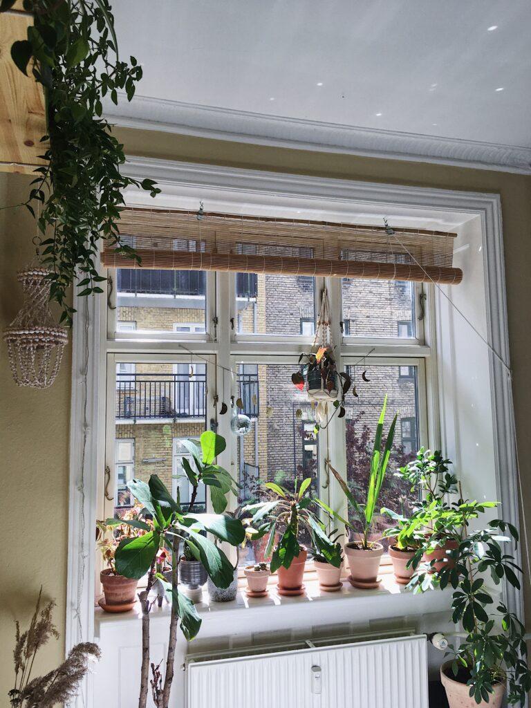 stueplanter til sydvendte vinduer